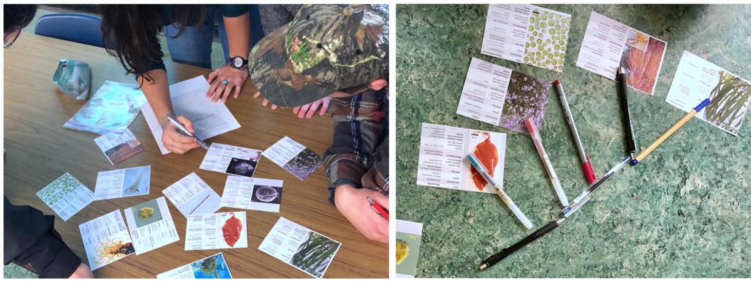 Biol 209 students playing an algae card-sorting game and building a phylogeny