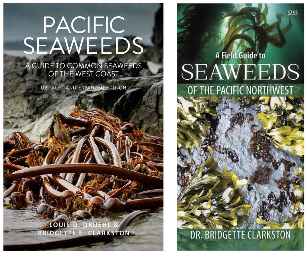 pacific seaweed book and pamphlet cover